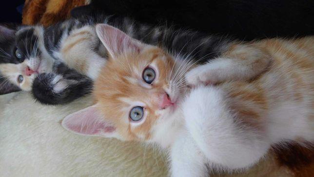 Śliczne kotki, 2 kocurki i 2 kotki