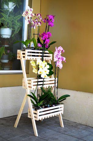 Комнатные растения (цветы) - жардиньерка