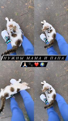 Ласковый котик ищет свою семью . БЕСПЛАТНО