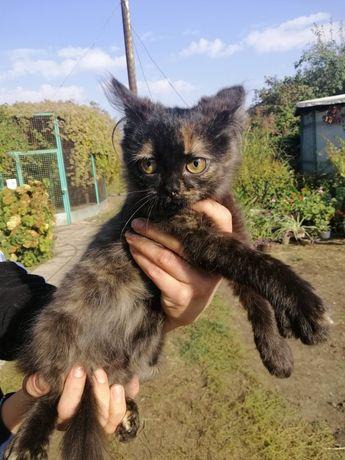 Кошечка котёнок трехцветка