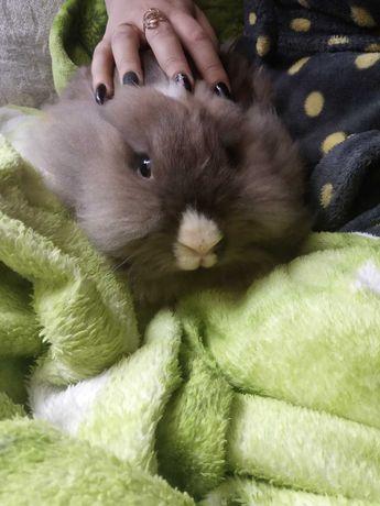 Продам шиншилового кролика,только Белгород-Днестровский.