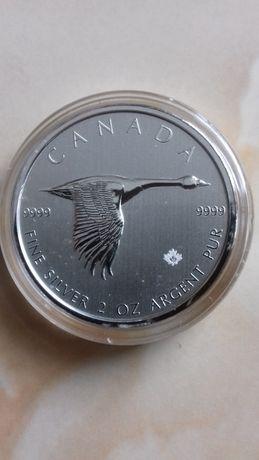 moneta kolekcjonerska kanadyjska gęś