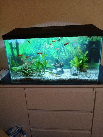 akwarium 105 l.z rybkami i całym wyposażeniem