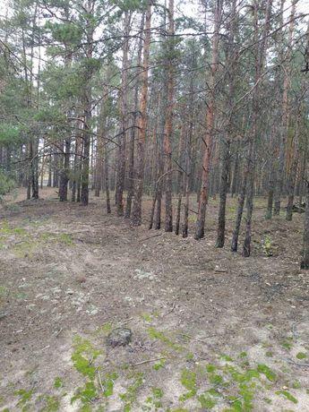 Выход в лес, Круги, 50 соток для строительства