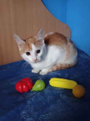 Яркая рыже- белая кошечка