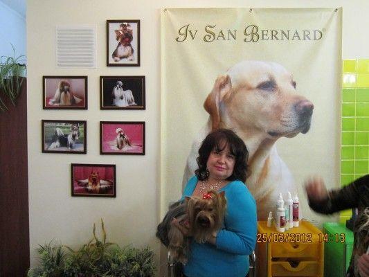 Стрижка собак и кошек Груминг салон Iv San Bernard