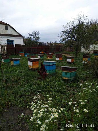Продам бджолосім'ї, пасіку, вулики