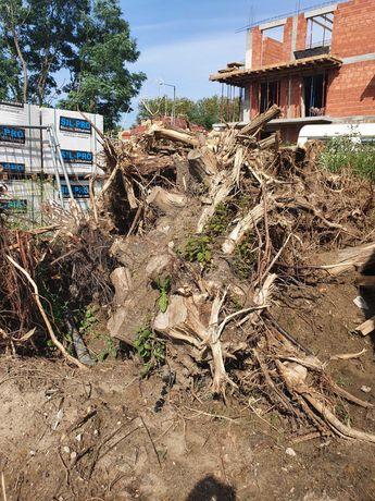 Korzenie po wycince drzew - oddam Pabianice