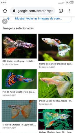 Queria destes peixes