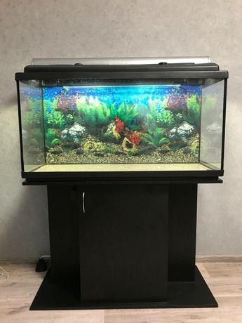 Продам аквариум 200 литров с тумбой , компрессором, обогревателем