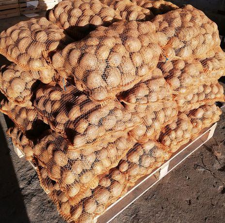 Ziemniaki sprzedam 250zl tona,jak lecą