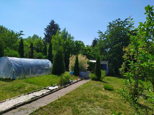 Ogródek działkowy, ROD Kościuszki, Czeladź-Piaski
