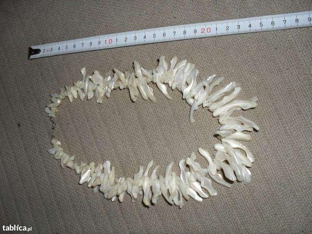 KORALE z MUSZLI perłowych