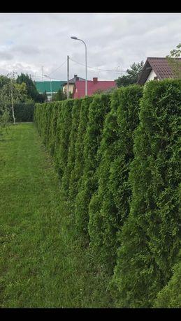 Wycinka drzew , pielęgnacja ogrodów
