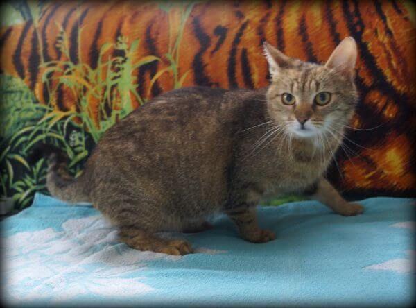 Fiona - kochana kotka do adopcji :)
