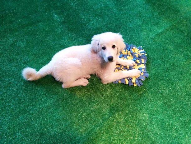 Petsitter, opieka dla psa - świetlica dla psów