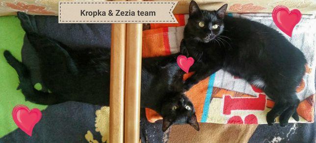 Kropka i Zezia - czarny team dla zaawansowanych i wyrozumiałych.