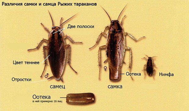 Уинчтожение тараканов.Тараканы после ашего визита не выживают.Гарантия