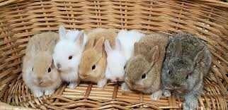 Vendo kit completo coelhos anões