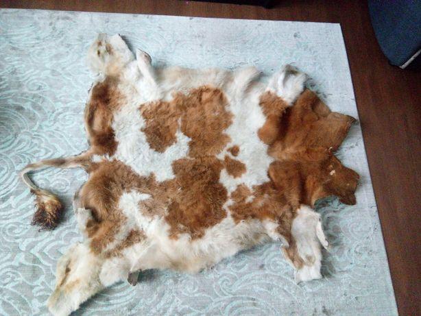 Шкура - ковер  теленка