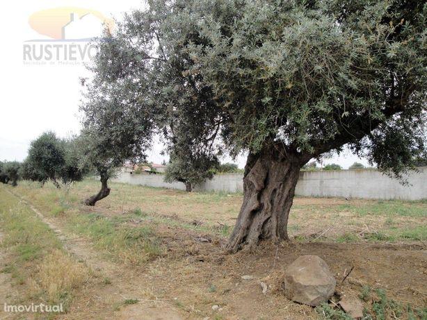 Terreno com viabilidade de construção | Aldeias de Montoi...