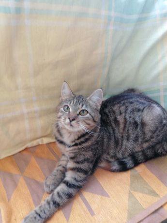 Кошка ищет дом и хороших, заботливых людей