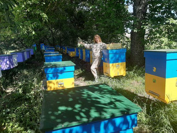 Бджолопакети карпатської породи з доставкою