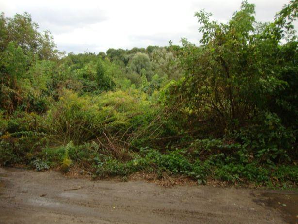 Продам в Гвоздове фасадный участок у леса.