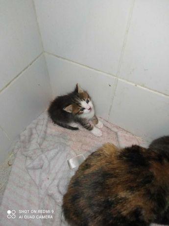 Tenho 2 gatinhos