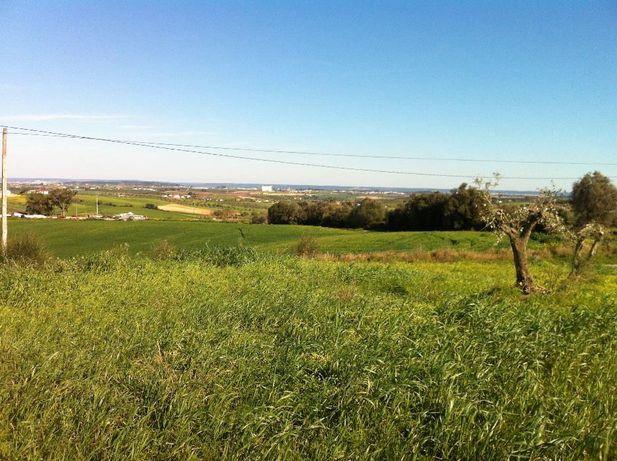 Terreno/Casal c/4 HECTARES a 5 minutos da A1(Santarém)