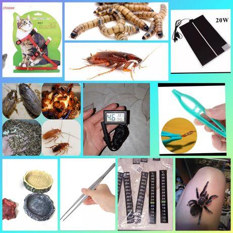 Кормовые насекомые термоковрик пинцет поводок корм гигрометр субстрат