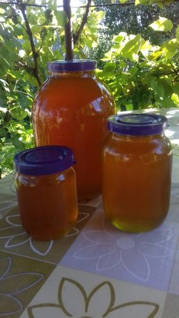 Продам мед і продукти бджільництва