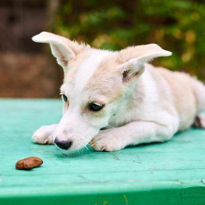 Нежная девочка Нюша ищет хозяина щенок щенки щенята пес щеночки