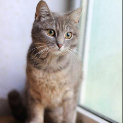 Малышка Фрида ищет семью, котенок, котята