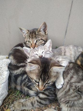 ПРЕКРАСНЫЕ котята, котенок, котик