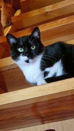 Кошка ищет дом !