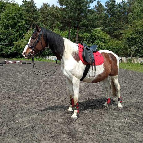 Dzierżawa konia Jaworzno