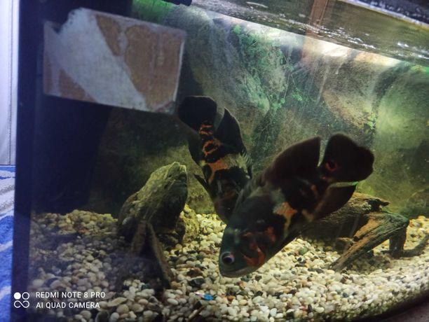 Akwarium 120l panorama + pielegnice