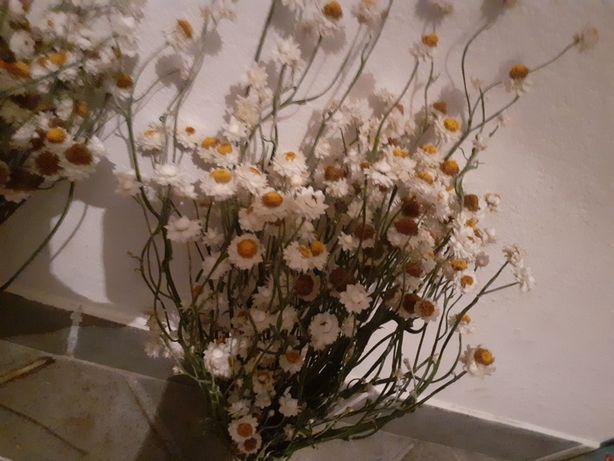Wiekuistka suszone kwiaty bukiety