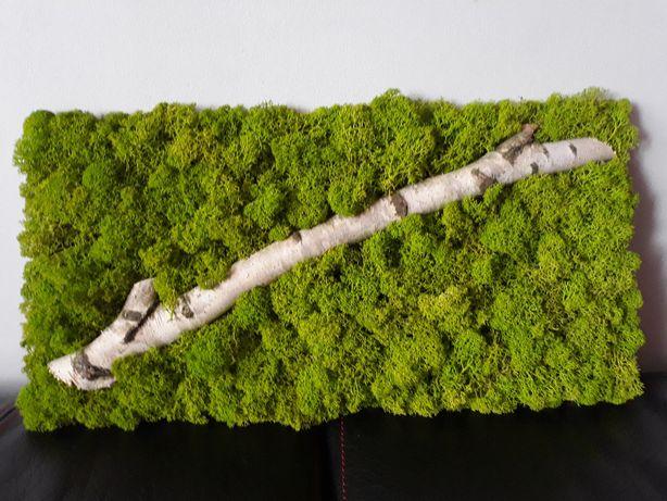 Nowoczesny, naturalny obraz z mchu (chrobotek)