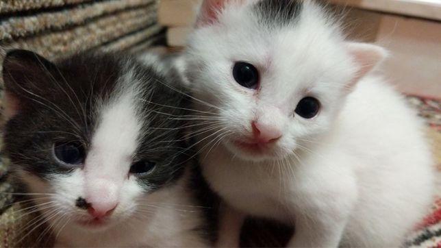 Двое из ларца: котята братья