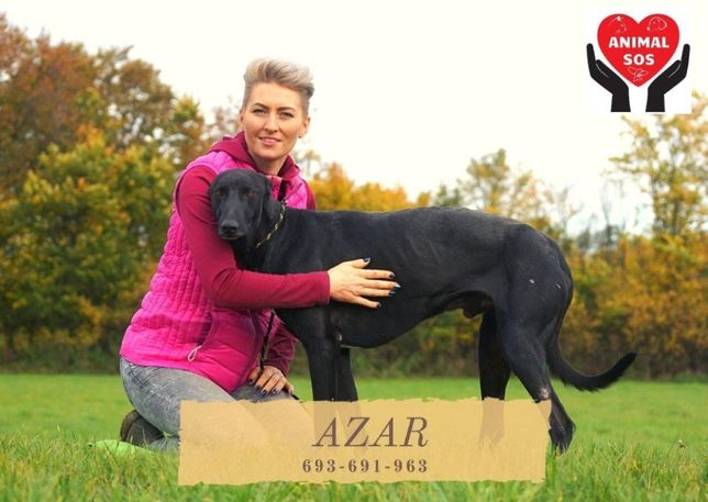 AZAR - przepiękny pies szuka domu