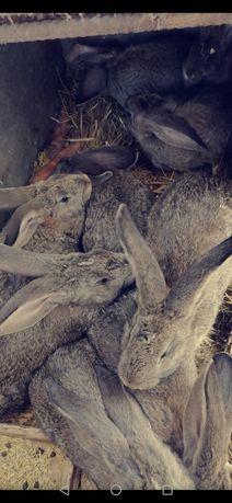 Młode króliki różnych ras