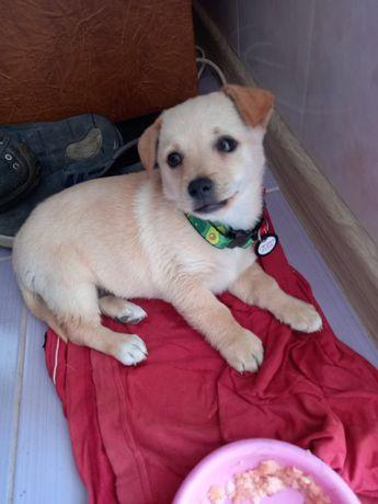 Девочка, 1.5 месяца Даша щенок, собака, пес