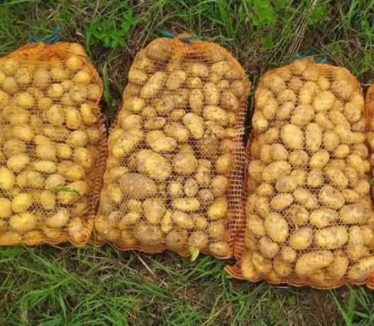 Ziemniaki wineta  1.30 kg