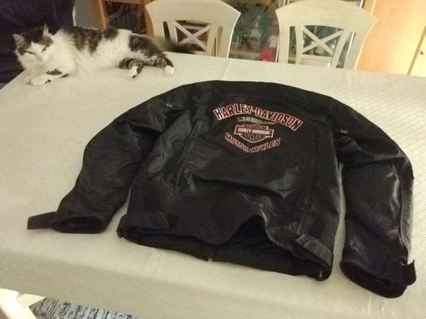 Casaco, Luvas Harley Davidson