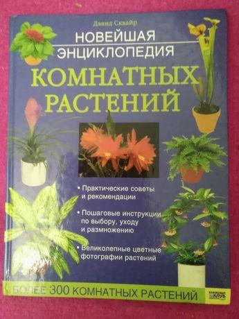Кімнатні рослини.