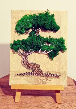 Art / Bonsai /Chrobotek / String Art