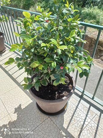 Plantas Muito Bonitas vendo por problemas pessoais
