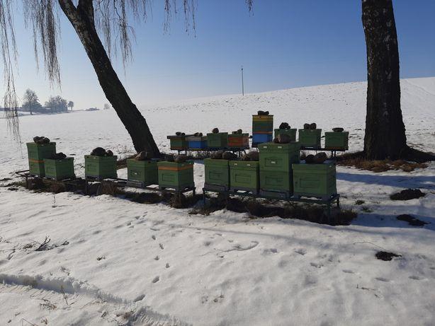 Pszczoly rodziny pszczele